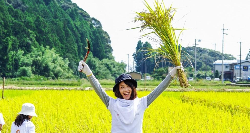 こだわり農法で育った徳島の美味しいお米を、アラフォーが収穫してきました
