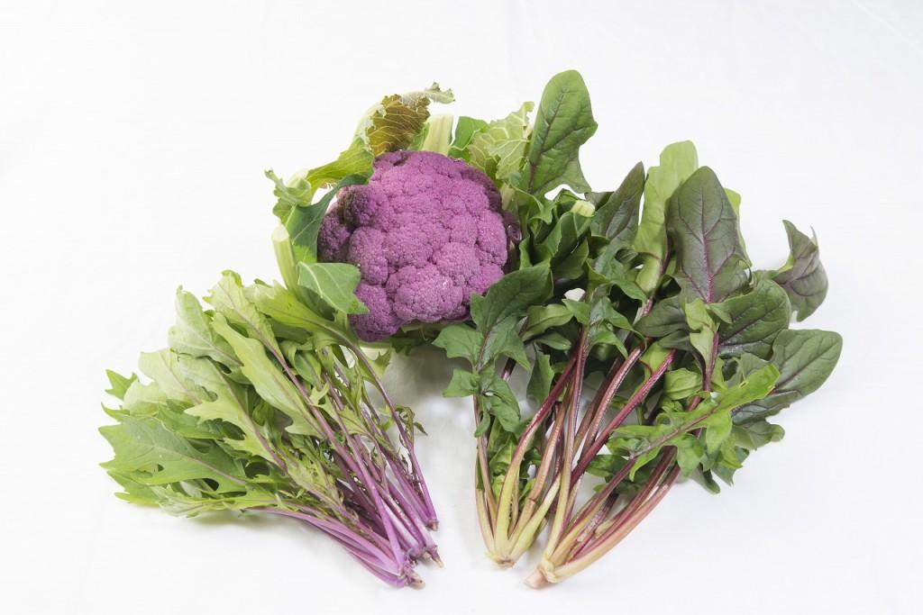 むらさき色のおいしい野菜『藤やさい』ってなんだ??