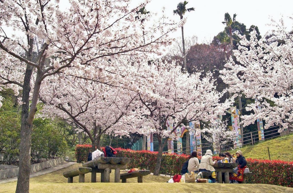 《まとめ》徳島のお花見スポット11選♪ シーズン到来。こどもと一緒に桜の景色を楽しもう!