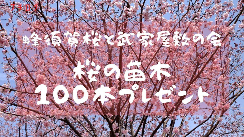 【プチログ】ああ美しや!蜂須賀桜 苗木を無料で100本プレゼント