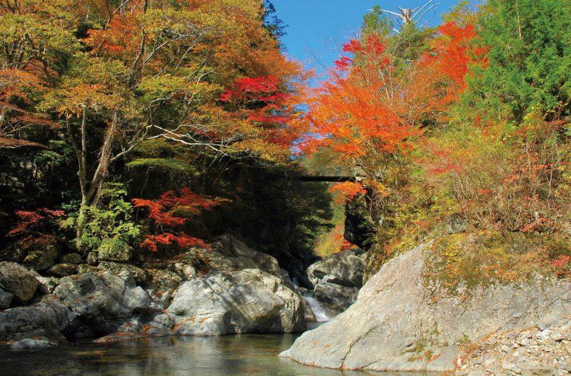 《まとめ》2019秋の紅葉イベント9選! 鮮やかに彩られる季節を楽しもう♪