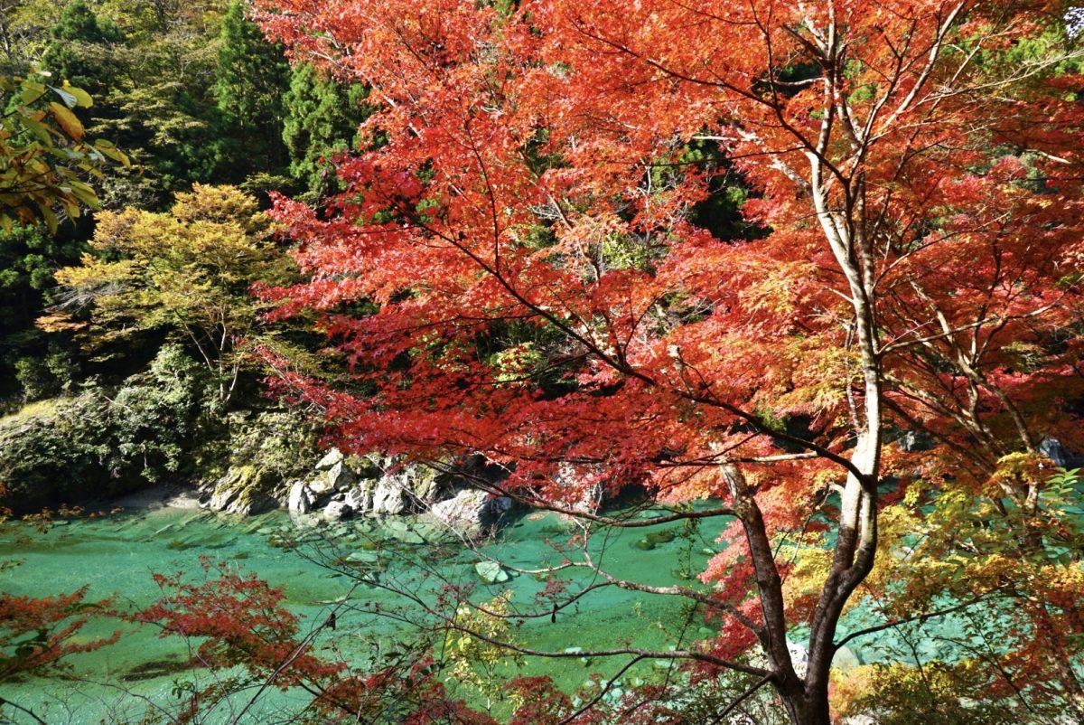 【三好市/祖谷温泉】徳島旅行記:県外の友人と徳島めぐり!絶好の紅葉&温泉日和で午前中を大満喫。
