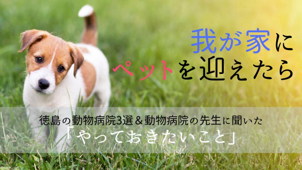 《まとめ》我が家にペットを迎えたら。徳島の動物病院3選&動物病院の先生に聞いた「やっておきたいこと」