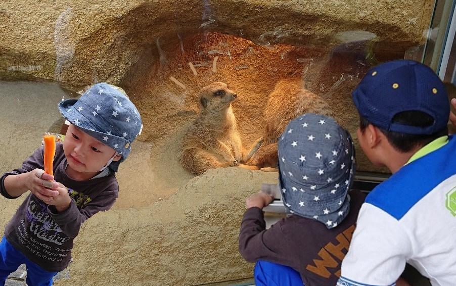 《徳島市》ミーアキャットにメロメロ『とくしま動物園 北島建設の森』リニューアルの裏側も