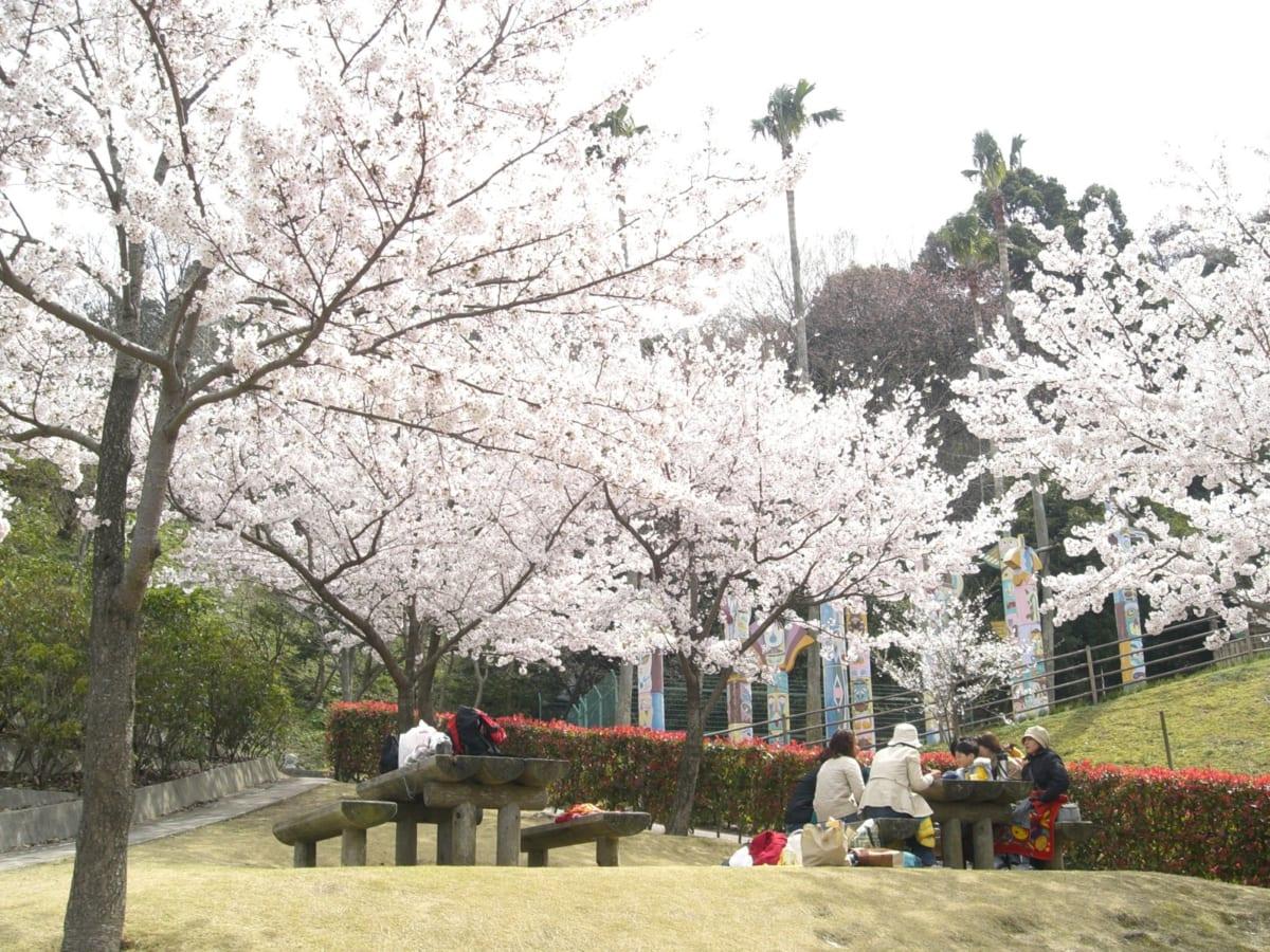 【2020年最新】やっぱりお花見がしたい!!徳島の桜名所まとめ