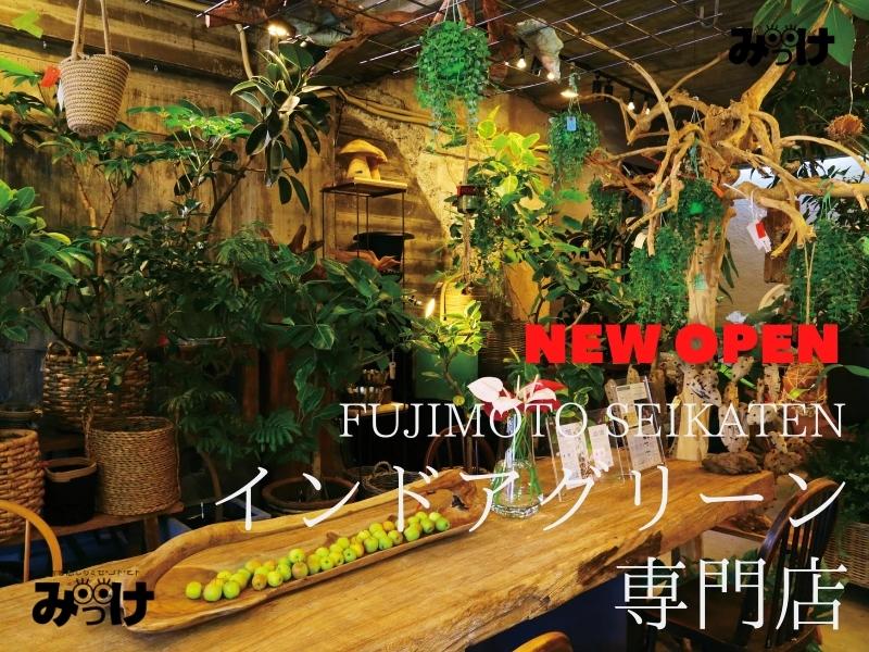 【6月OPEN】藤本生花店のインドアグリーン専門店(徳島市大道)お家にひとつ迎えたい、心を癒すインドアグリーン