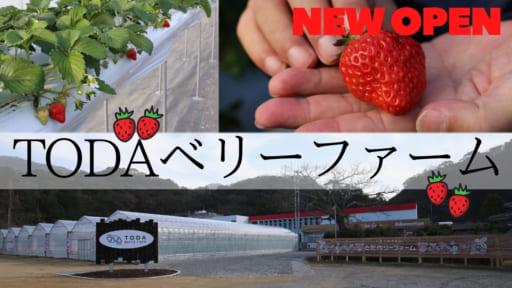 【2021.1月OPEN】TODAベリーファーム(鳴門市北灘町)グラウンドでいちご狩り!? 廃校が観光いちご農園として、再び人と笑顔が集まる場所に生まれ変わる