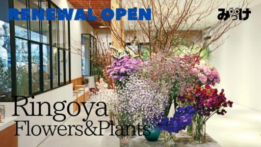 【2021.2月移転OPEN】Ringoya Flowers&Plants(リンゴヤ/鳴門市撫養町)お花1本からでもお気軽に。暮らしのルーティンに加えたい、行き着けにしたい花屋さん