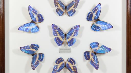 GW企画展「みんなちがってみんないい~日本の生物多様性とその保全~」[開催中止]