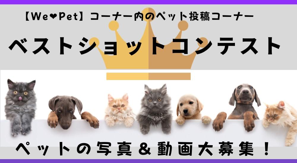 『We love Pet』内ペット投稿コーナー『ベストショットコンテスト』応募概要