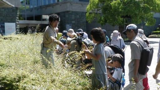 野外生きものかんさつ「花巡り!植物かんさつハイキング9月~秋の七草探してみませんか?~」[9/16申込締切]