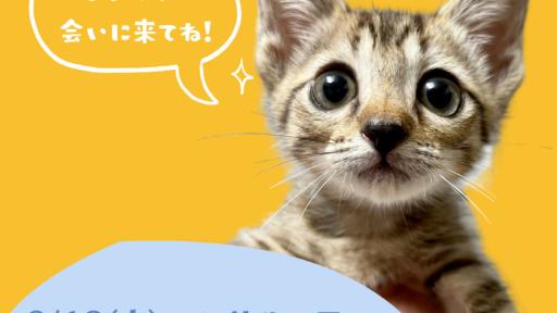 猫の参観日(譲渡会)in ノビアノビオ